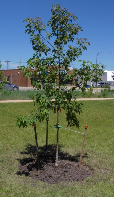 Memorial donations make way to plant trees on park anniversary
