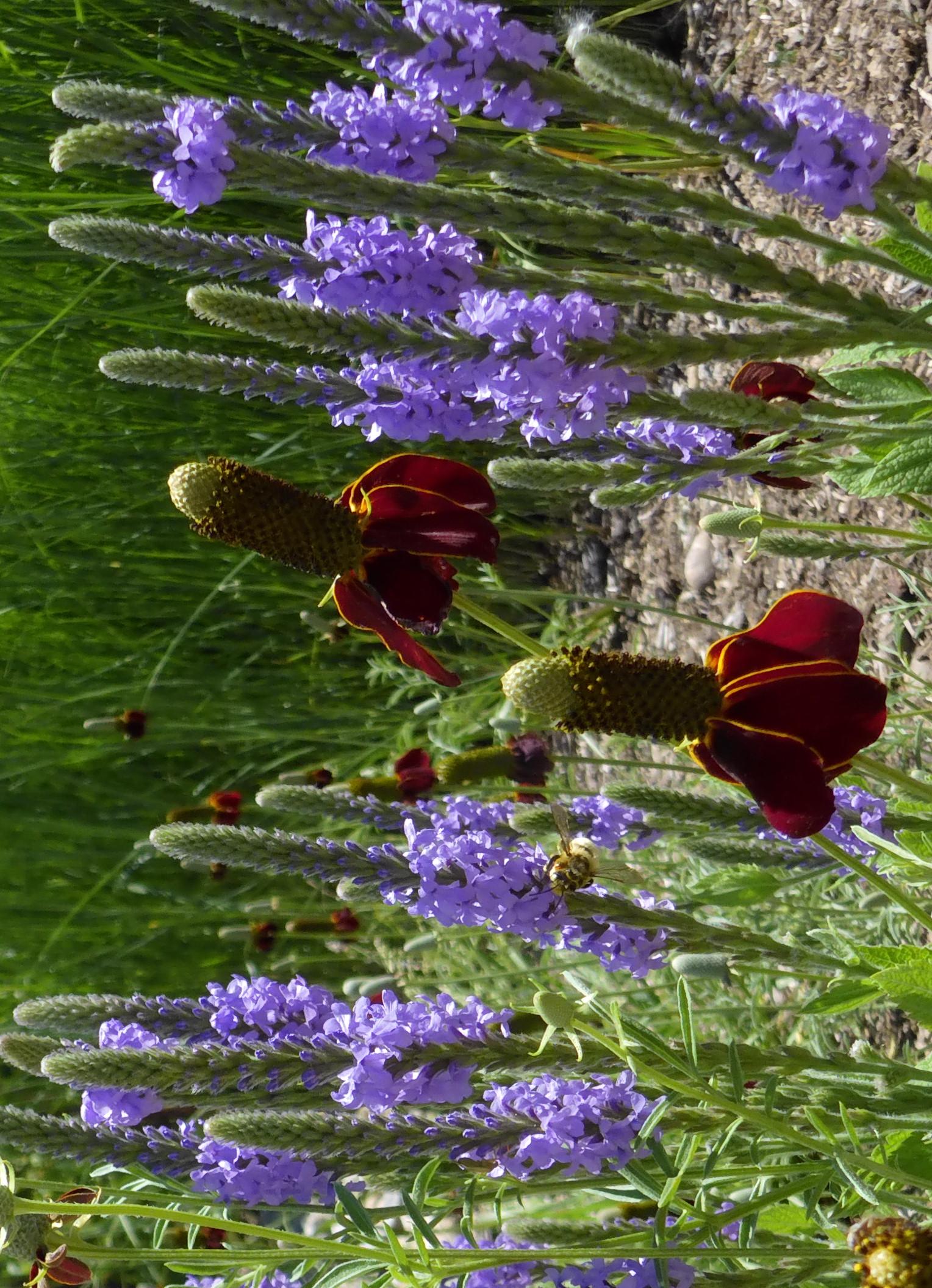 Summer rains boost native species